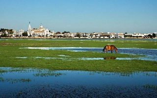 Doñana is a Spanish protected natural space located in Andalusia ...